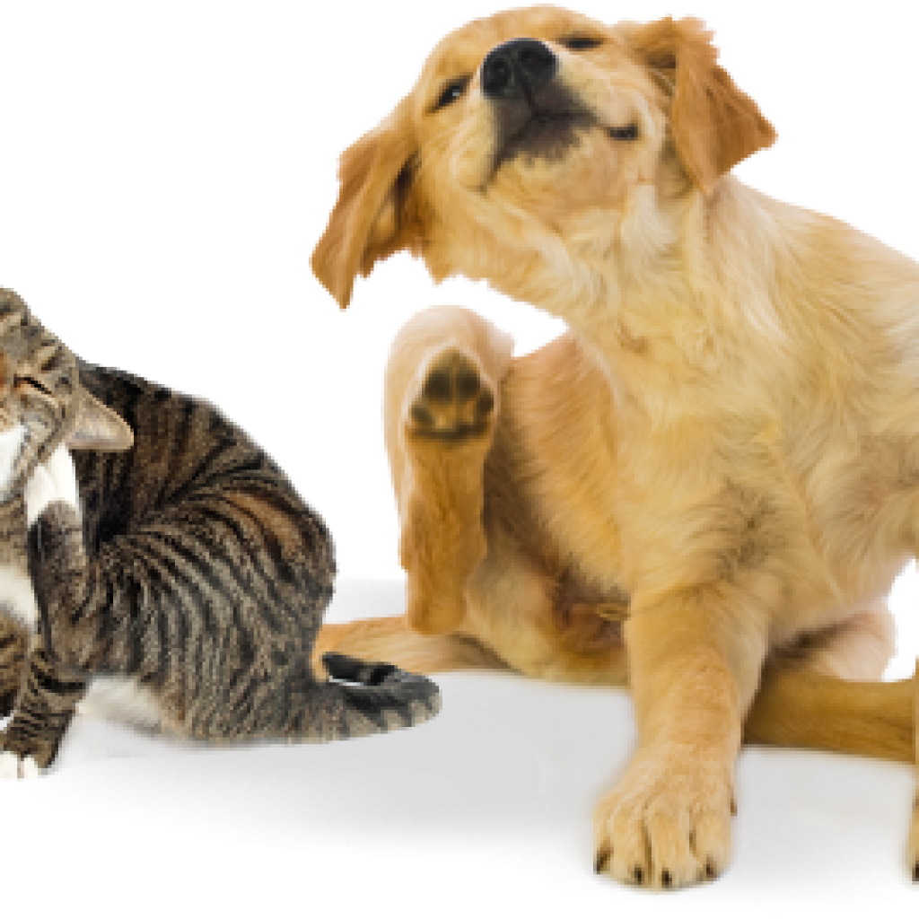 Protecting Your Dogs & Cat